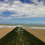 Möwen am Strand von Mariakerke/Ostende