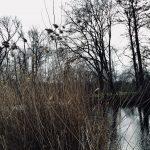 Berlin, Tiergarten, Februar 2020