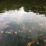 Teich im Brühler Schlosspark Oktober 2011