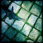 Hipstamatic: Toter Vogel auf dem Boden des Domherrenfriedhofs am Kölner Dom
